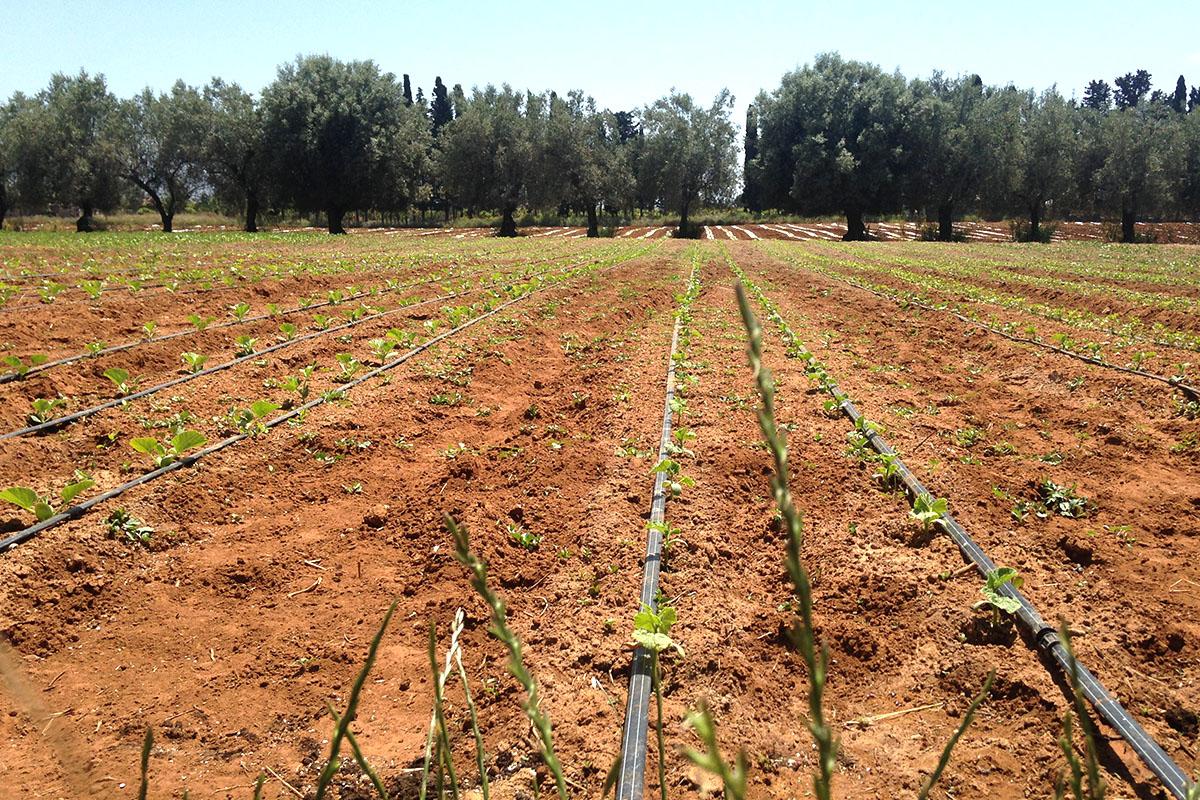 Biodynamic Gardening Villa Melina Ragusa